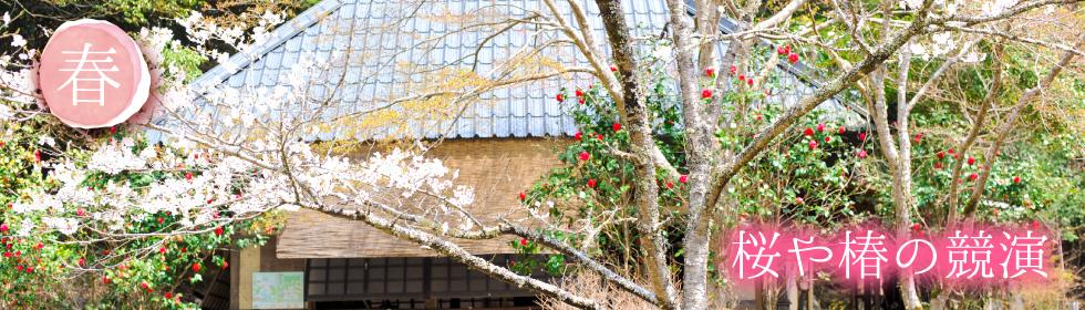 桜や椿の競演
