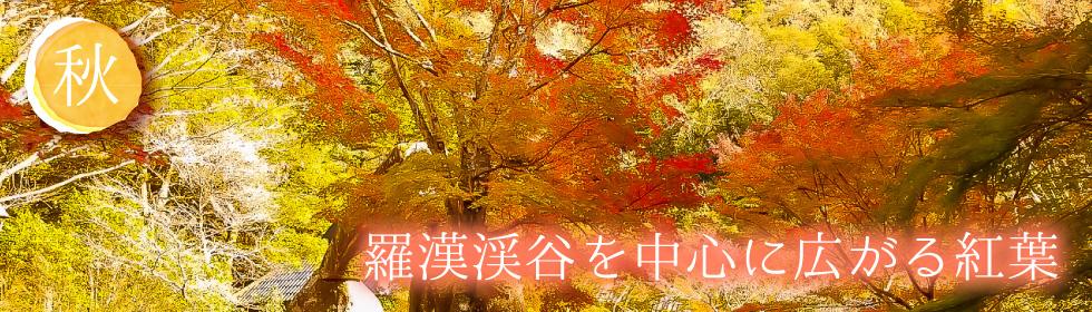 羅漢渓谷を中心に広がる紅葉